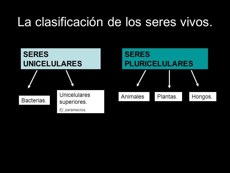 La clasificación de los seres vivos. SERES UNICELULARES SERES PLURICELULARES Bacterias. Unicelulares superiores. Ej: paramecios. Hongos.Plantas.Animal