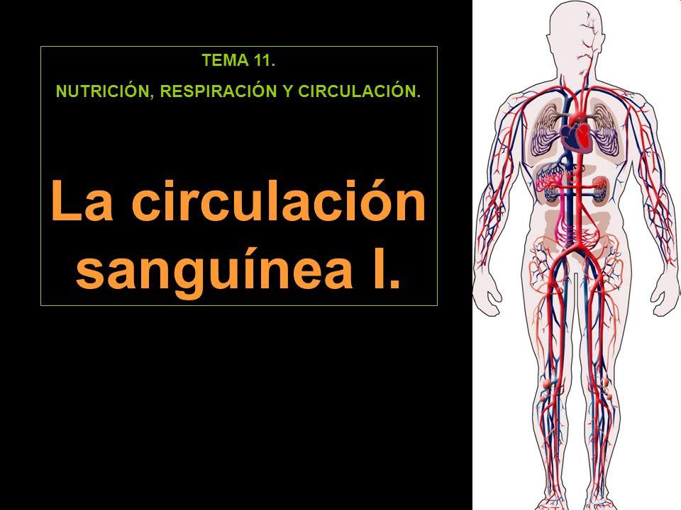 TEMA 11. NUTRICIÓN, RESPIRACIÓN Y CIRCULACIÓN. La circulación sanguínea I.