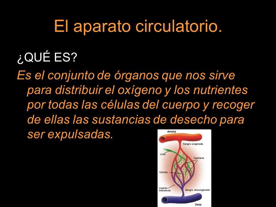 El aparato circulatorio. ¿QUÉ ES? Es el conjunto de órganos que nos sirve para distribuir el oxígeno y los nutrientes por todas las células del cuerpo