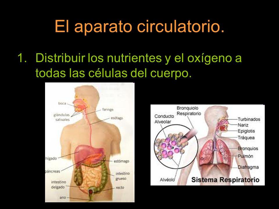 El aparato circulatorio. 1.Distribuir los nutrientes y el oxígeno a todas las células del cuerpo.