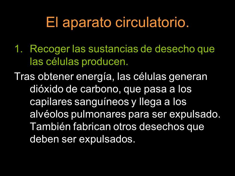 El aparato circulatorio. 1.Recoger las sustancias de desecho que las células producen. Tras obtener energía, las células generan dióxido de carbono, q