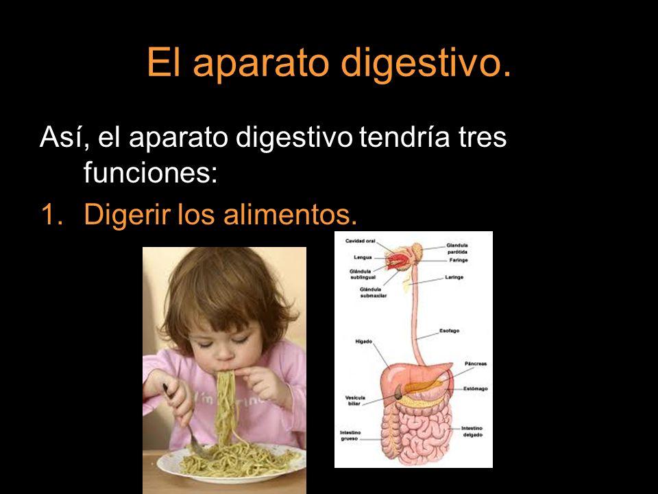 El aparato digestivo. Así, el aparato digestivo tendría tres funciones: 1.Digerir los alimentos.