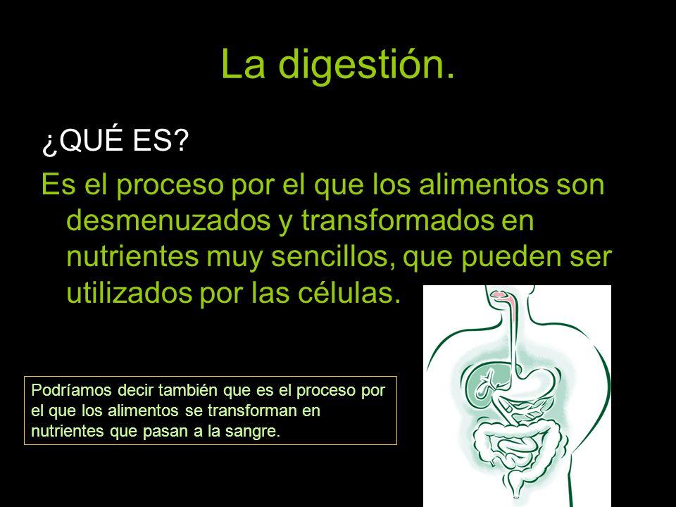 La digestión. ¿QUÉ ES? Es el proceso por el que los alimentos son desmenuzados y transformados en nutrientes muy sencillos, que pueden ser utilizados