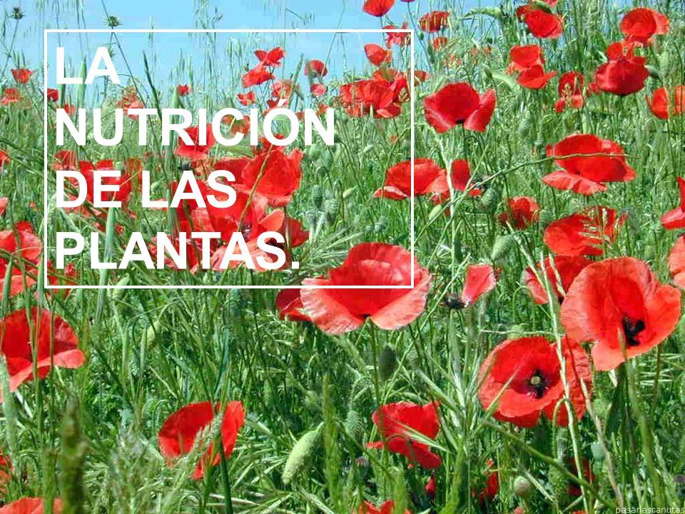 La fotosíntesis. http://www.youtube.com/watch?v=XrkB1CLx Vgw&feature=related