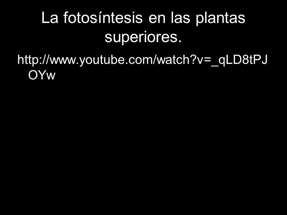 http://www.youtube.com/watch?v=_qLD8tPJ OYw