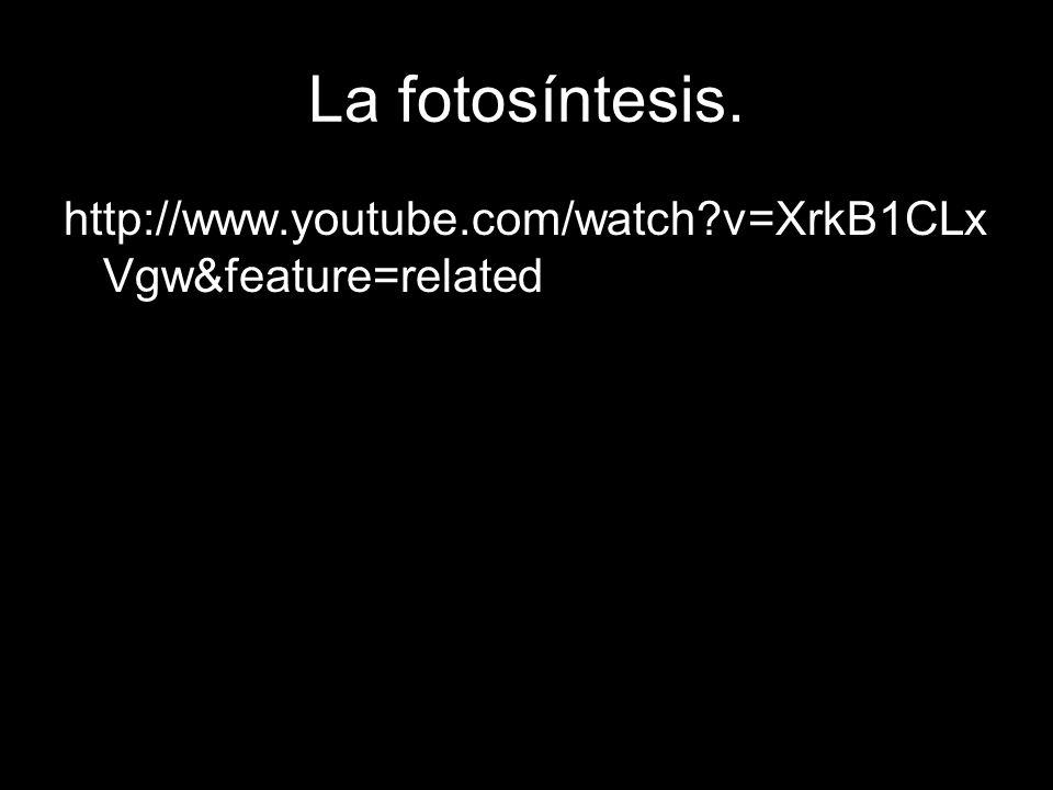 La fotosíntesis.¿QUÉ ES.