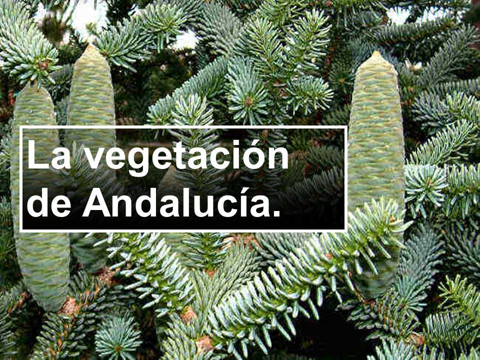 La vegetación de Andalucía.