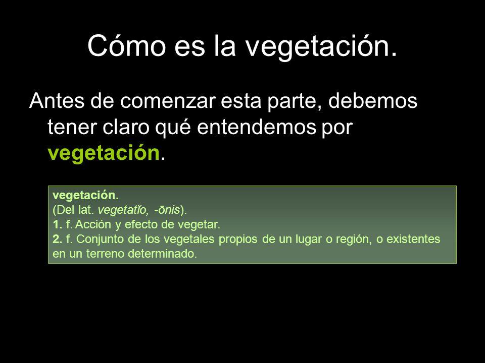 Cómo es la vegetación. Antes de comenzar esta parte, debemos tener claro qué entendemos por vegetación. vegetación. (Del lat. vegetatĭo, -ōnis). 1. f.