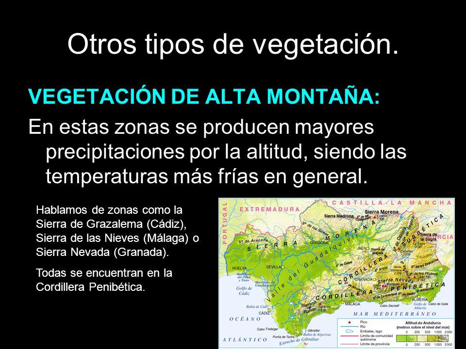 Otros tipos de vegetación. VEGETACIÓN DE ALTA MONTAÑA: En estas zonas se producen mayores precipitaciones por la altitud, siendo las temperaturas más