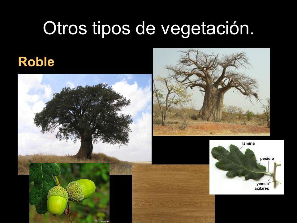 Otros tipos de vegetación. Roble