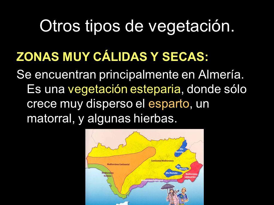 ZONAS MUY CÁLIDAS Y SECAS: Se encuentran principalmente en Almería. Es una vegetación esteparia, donde sólo crece muy disperso el esparto, un matorral