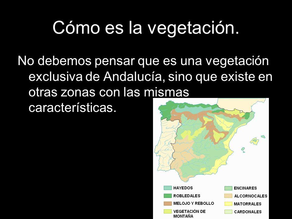 No debemos pensar que es una vegetación exclusiva de Andalucía, sino que existe en otras zonas con las mismas características.