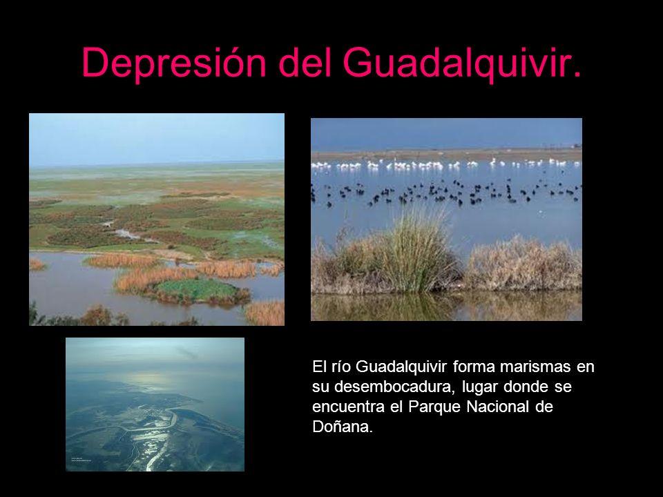 El río Guadalquivir forma marismas en su desembocadura, lugar donde se encuentra el Parque Nacional de Doñana.