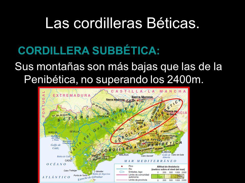 CORDILLERA SUBBÉTICA: Sus montañas son más bajas que las de la Penibética, no superando los 2400m.