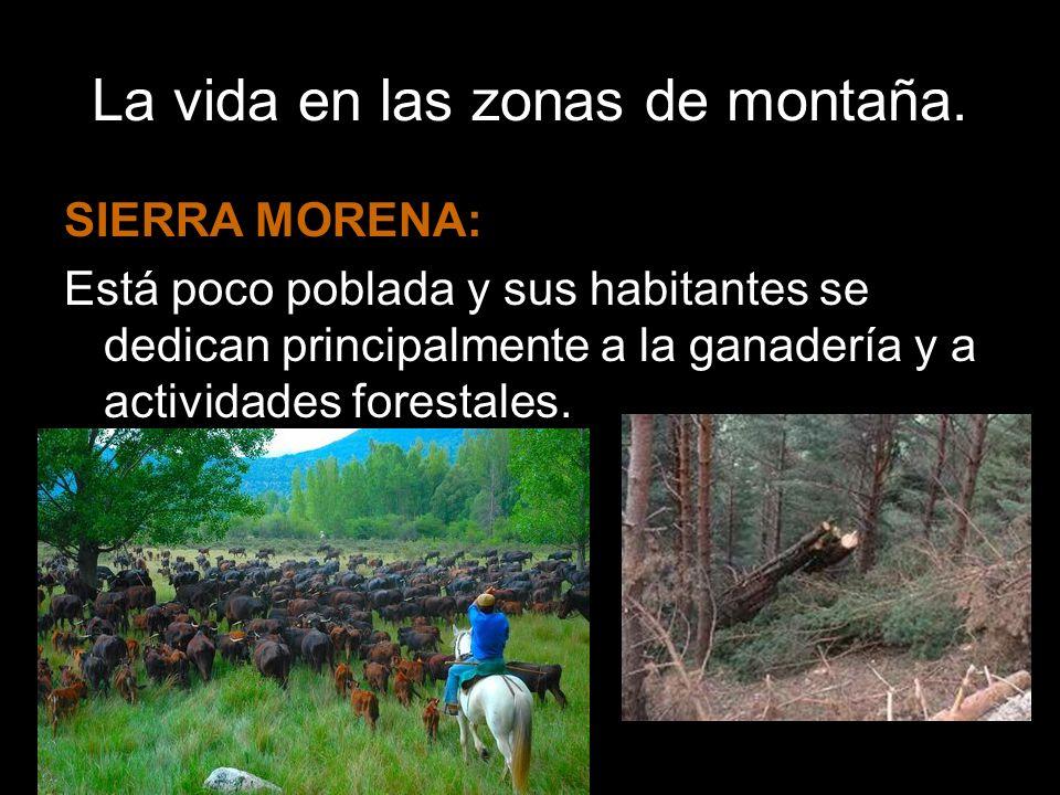 La vida en las zonas de montaña. SIERRA MORENA: Está poco poblada y sus habitantes se dedican principalmente a la ganadería y a actividades forestales