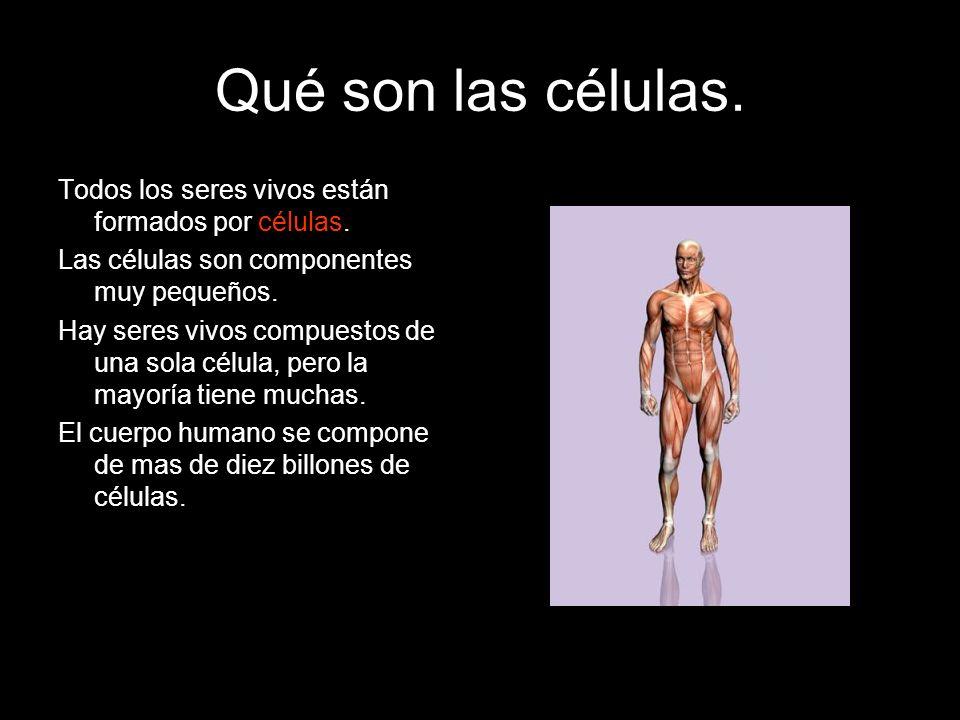 Qué son las células. Todos los seres vivos están formados por células. Las células son componentes muy pequeños. Hay seres vivos compuestos de una sol