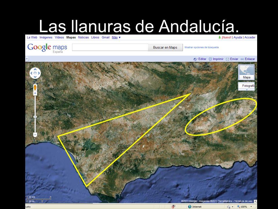 La Depresión del Guadalquivir.Es una amplia llanura de poca altitud.
