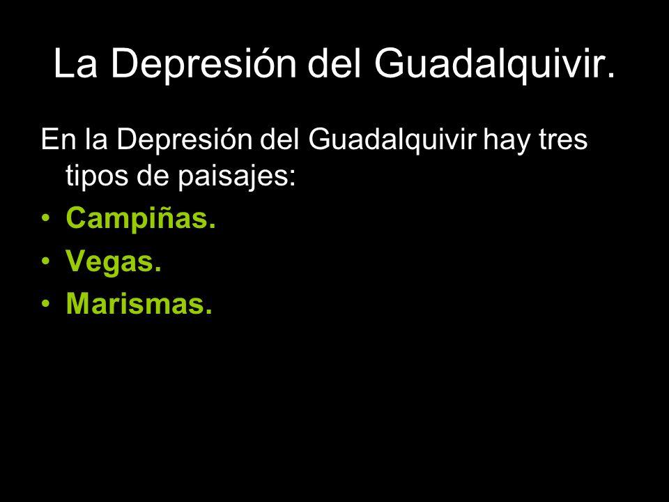 La Depresión del Guadalquivir.