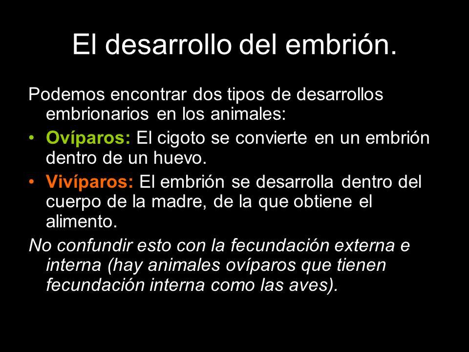 Podemos encontrar dos tipos de desarrollos embrionarios en los animales: Ovíparos: El cigoto se convierte en un embrión dentro de un huevo. Vivíparos: