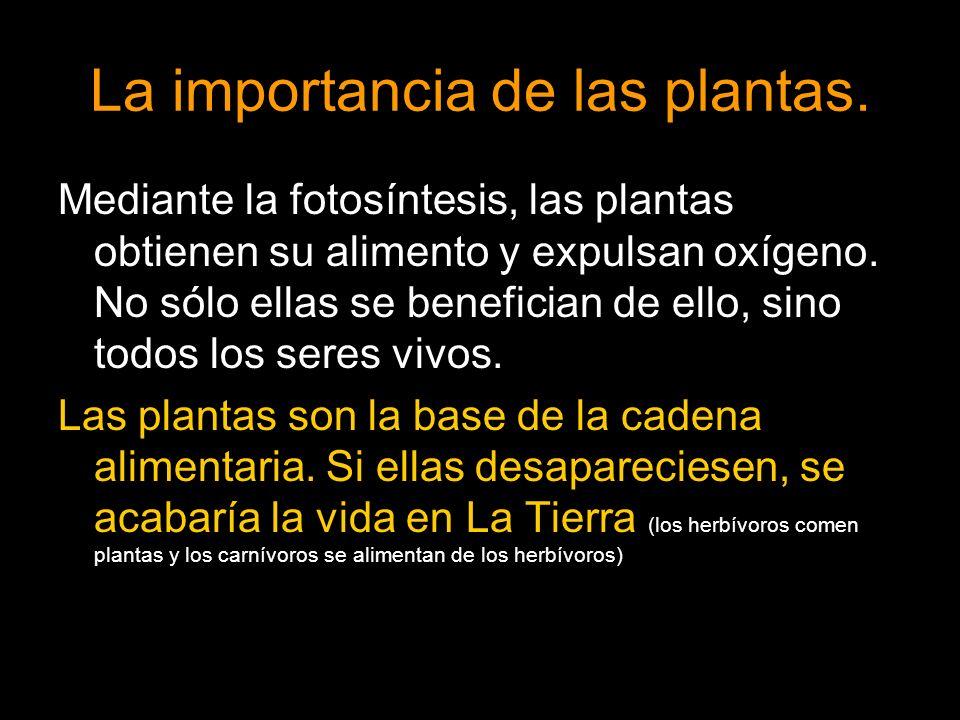 La importancia de las plantas. Mediante la fotosíntesis, las plantas obtienen su alimento y expulsan oxígeno. No sólo ellas se benefician de ello, sin