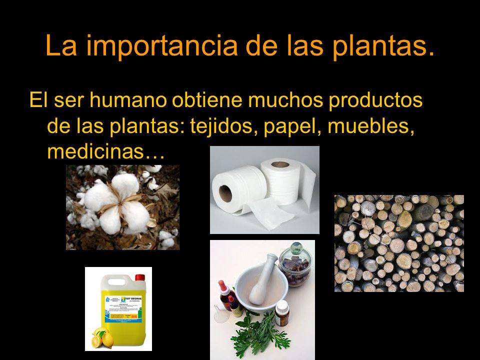 La importancia de las plantas. El ser humano obtiene muchos productos de las plantas: tejidos, papel, muebles, medicinas…