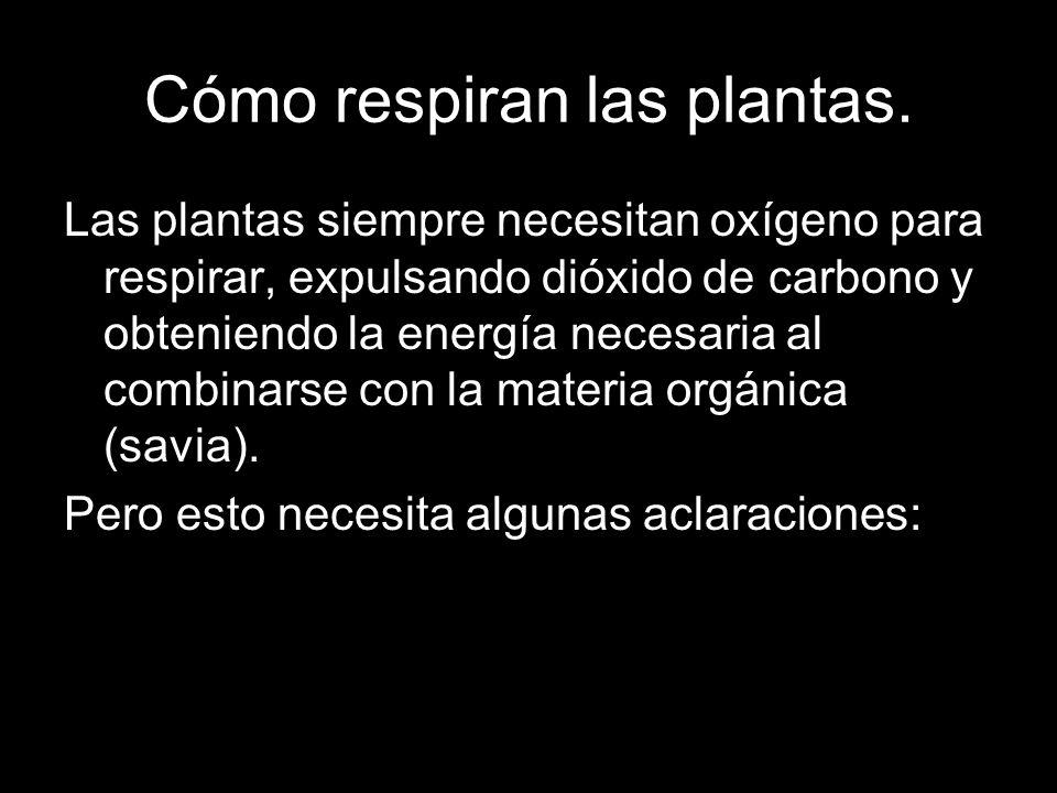 Cómo respiran las plantas. Las plantas siempre necesitan oxígeno para respirar, expulsando dióxido de carbono y obteniendo la energía necesaria al com