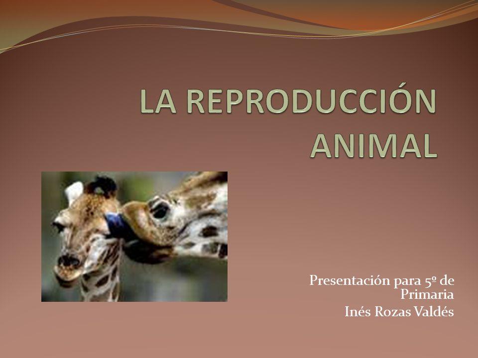 Presentación para 5º de Primaria Inés Rozas Valdés