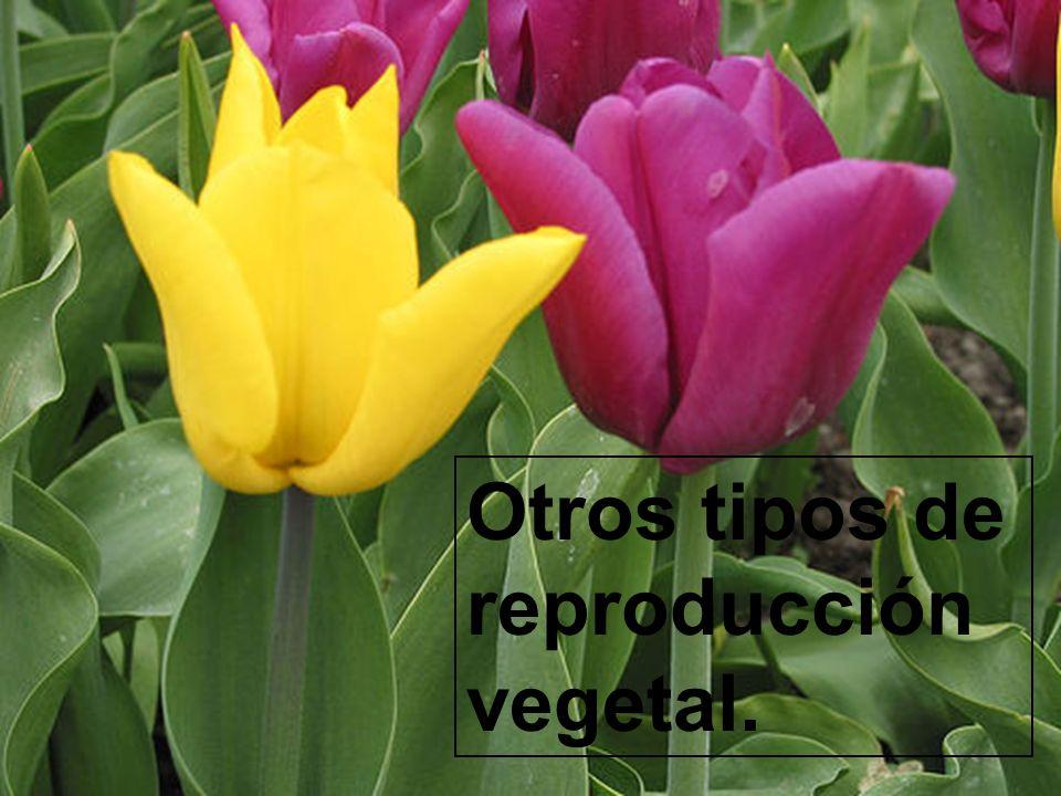 Otros tipos de reproducción vegetal.