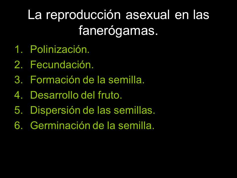 La reproducción asexual en las fanerógamas.1.Polinización.