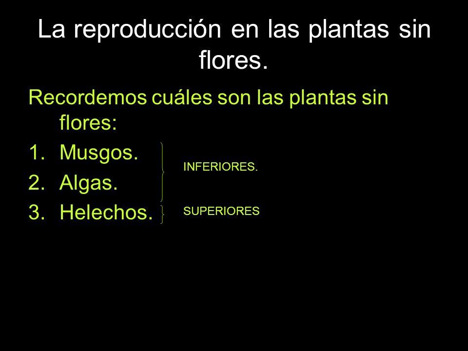 La reproducción en las plantas sin flores.Recordemos cuáles son las plantas sin flores: 1.Musgos.