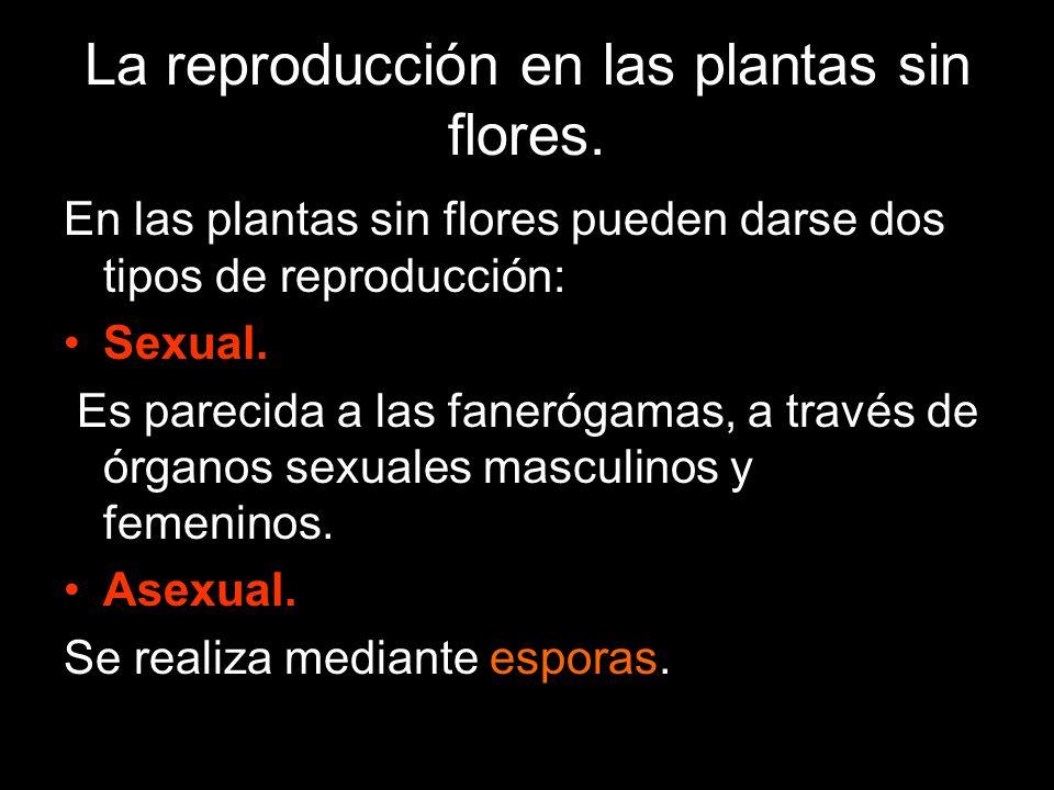 La reproducción en las plantas sin flores.
