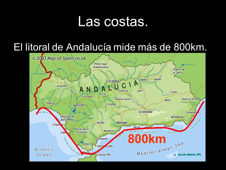 Las costas. El litoral de Andalucía mide más de 800km. 800km