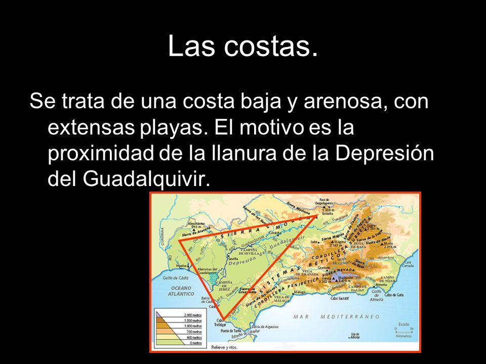 Se trata de una costa baja y arenosa, con extensas playas. El motivo es la proximidad de la llanura de la Depresión del Guadalquivir.