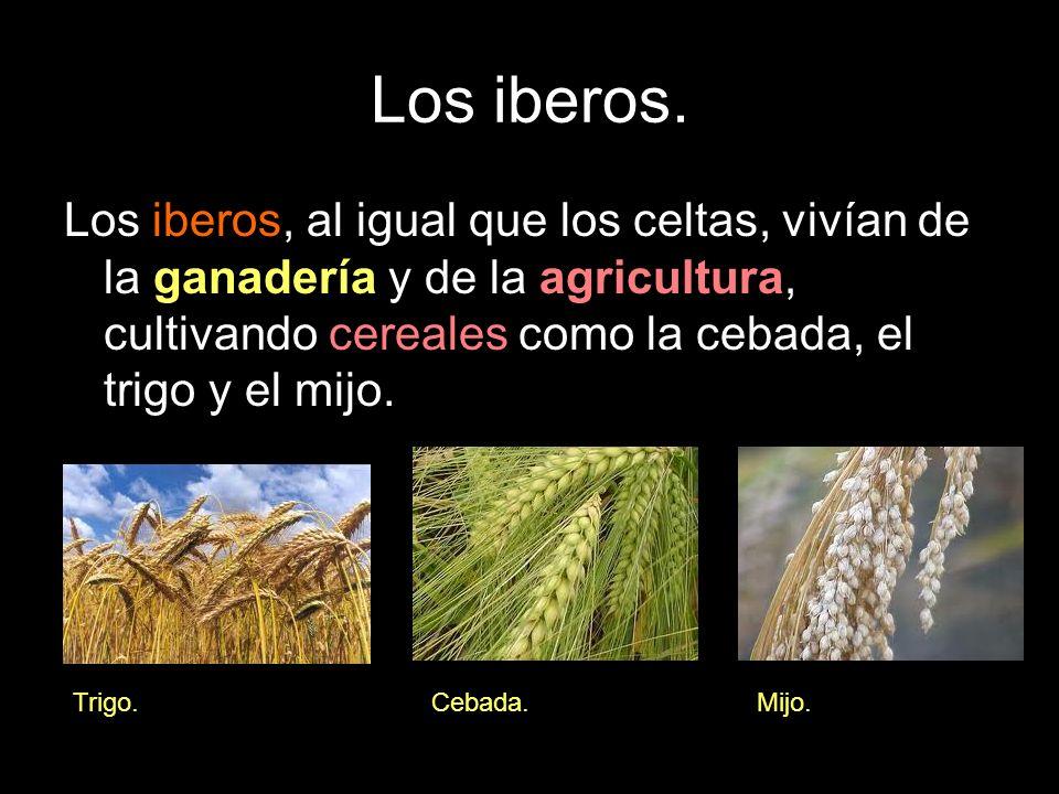 Los iberos. Los iberos, al igual que los celtas, vivían de la ganadería y de la agricultura, cultivando cereales como la cebada, el trigo y el mijo. T