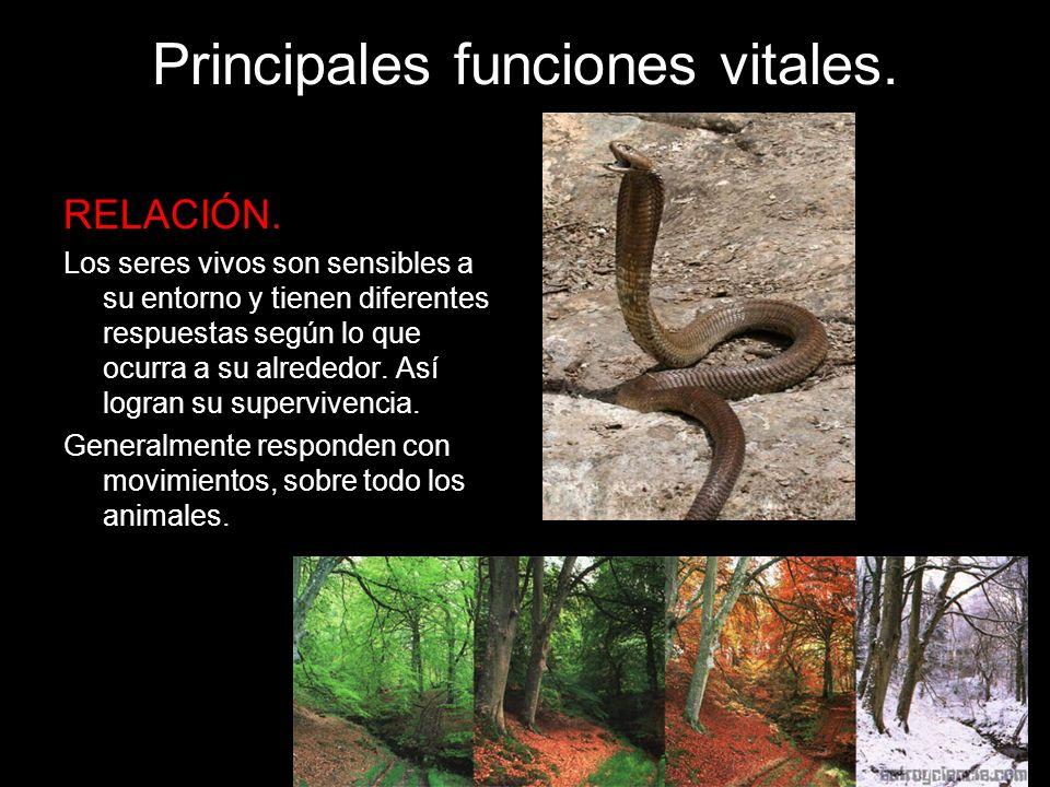 Principales funciones vitales. RELACIÓN. Los seres vivos son sensibles a su entorno y tienen diferentes respuestas según lo que ocurra a su alrededor.