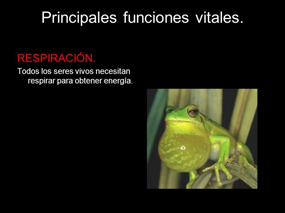 Principales funciones vitales.REPRODUCCIÓN.