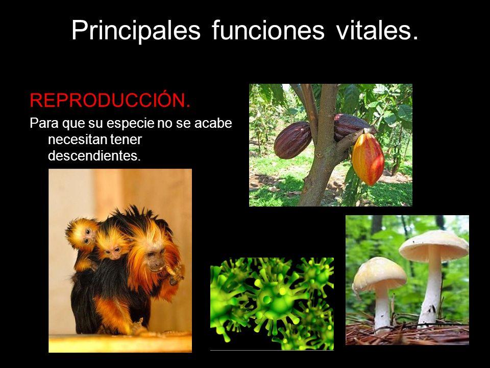 Principales funciones vitales. REPRODUCCIÓN. Para que su especie no se acabe necesitan tener descendientes.