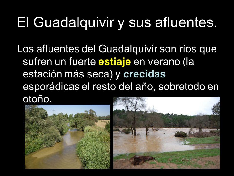 El Guadalquivir y sus afluentes. Los afluentes del Guadalquivir son ríos que sufren un fuerte estiaje en verano (la estación más seca) y crecidas espo