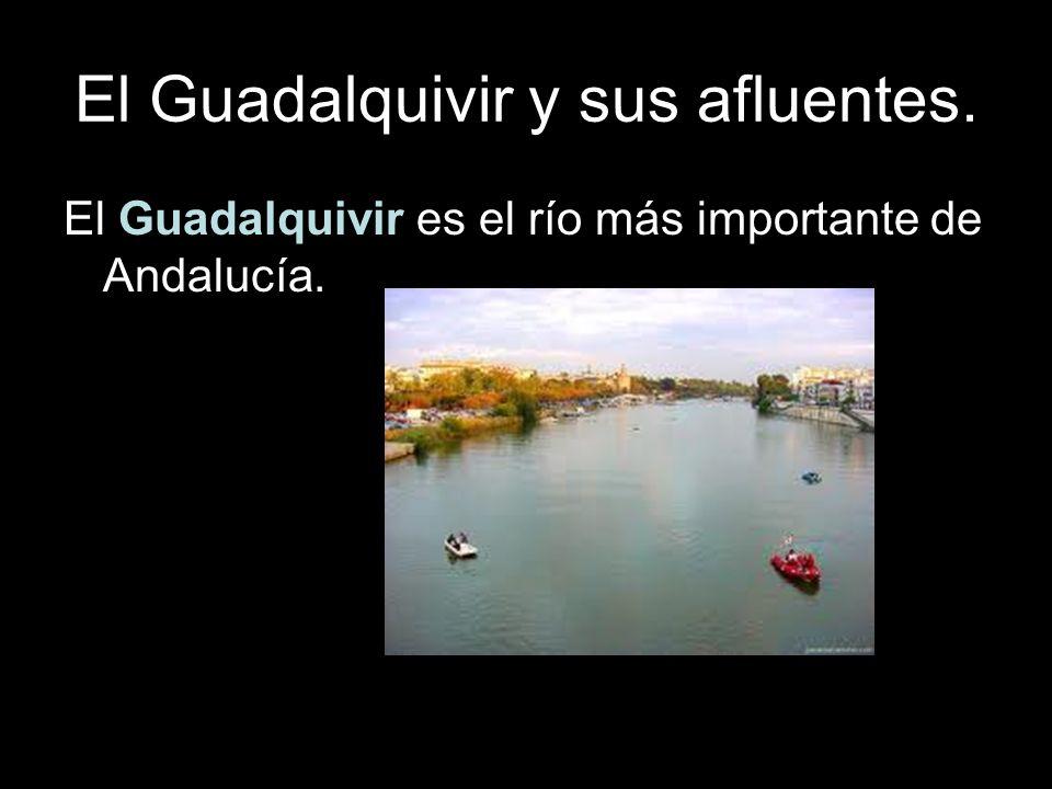El Guadalquivir y sus afluentes. El Guadalquivir atraviesa Andalucía de Este a Oeste. E O