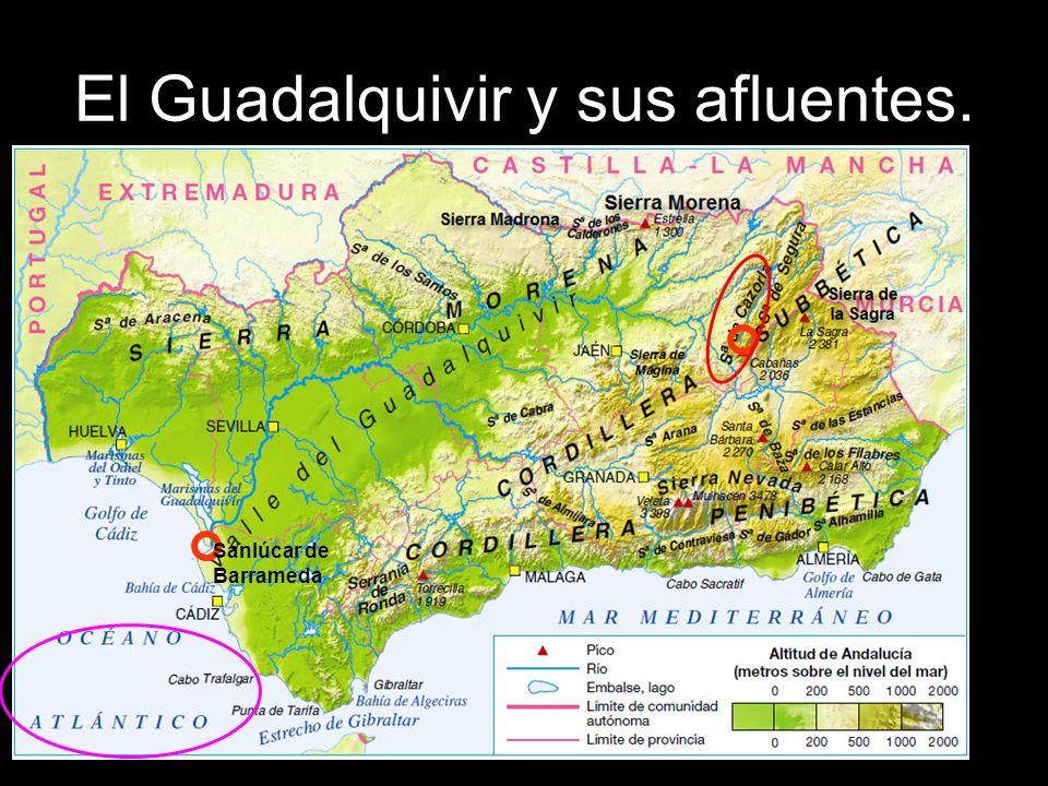 El Guadalquivir y sus afluentes.