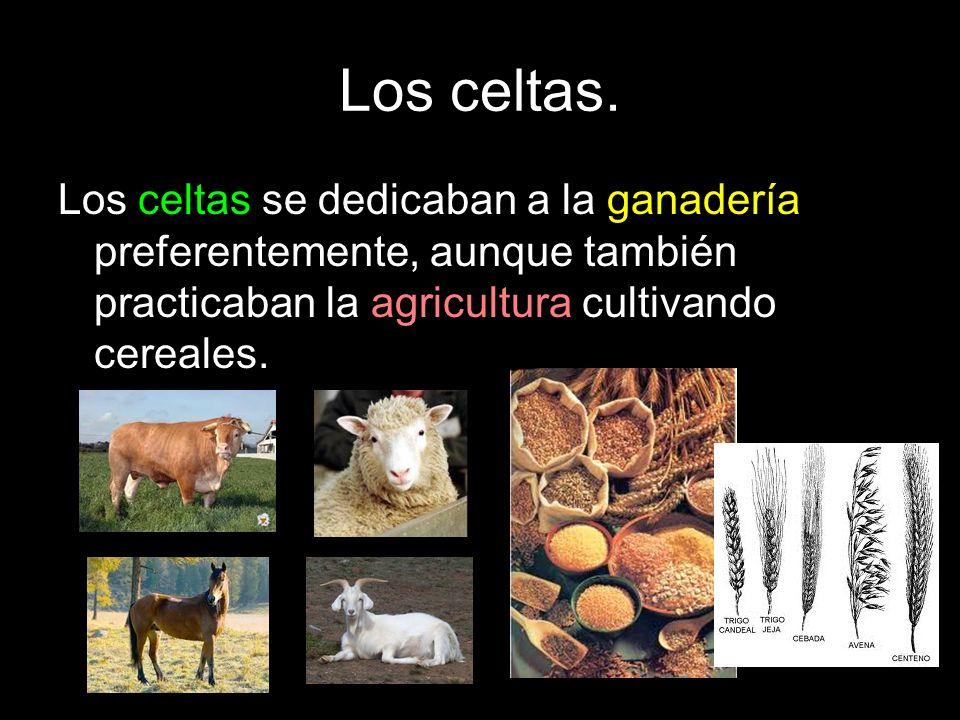 Los celtas. Los celtas se dedicaban a la ganadería preferentemente, aunque también practicaban la agricultura cultivando cereales.