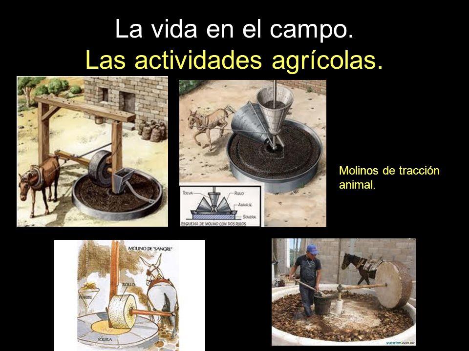 La vida en el campo. Las actividades agrícolas. Molinos de tracción animal.