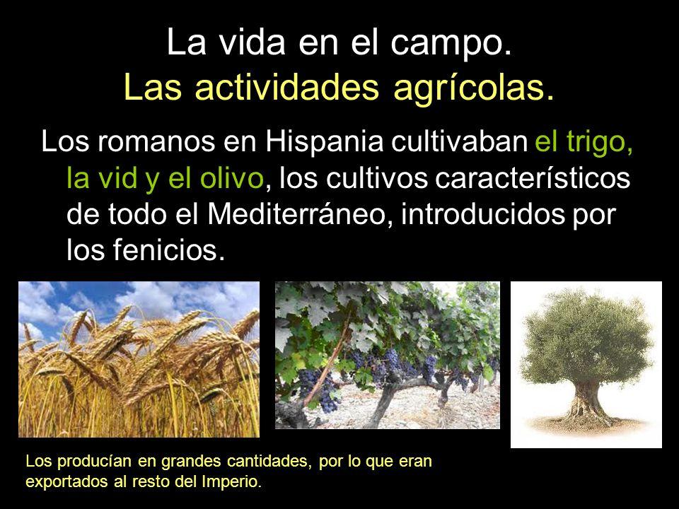 La vida en el campo. Las actividades agrícolas. Los romanos en Hispania cultivaban el trigo, la vid y el olivo, los cultivos característicos de todo e
