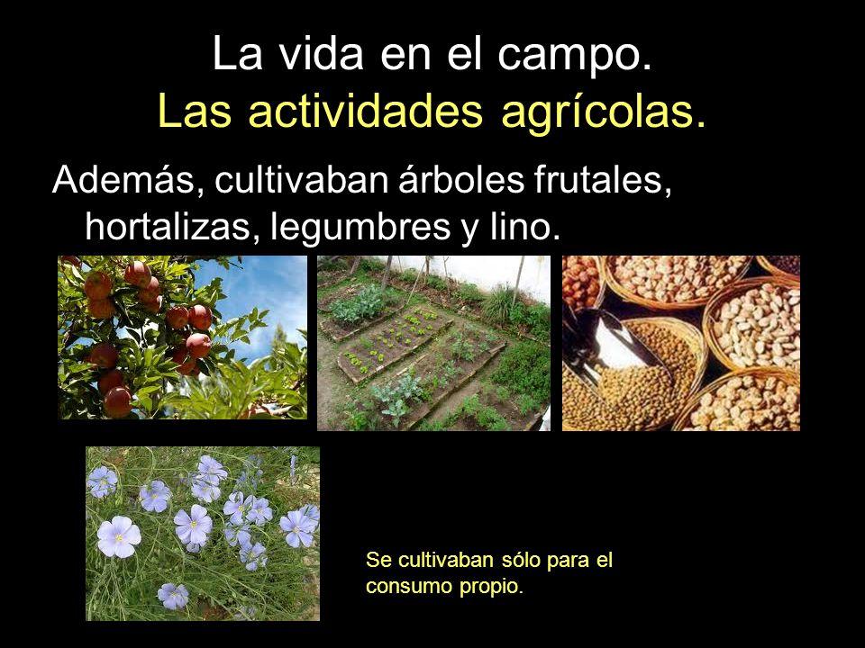 La vida en el campo. Las actividades agrícolas. Además, cultivaban árboles frutales, hortalizas, legumbres y lino. Se cultivaban sólo para el consumo