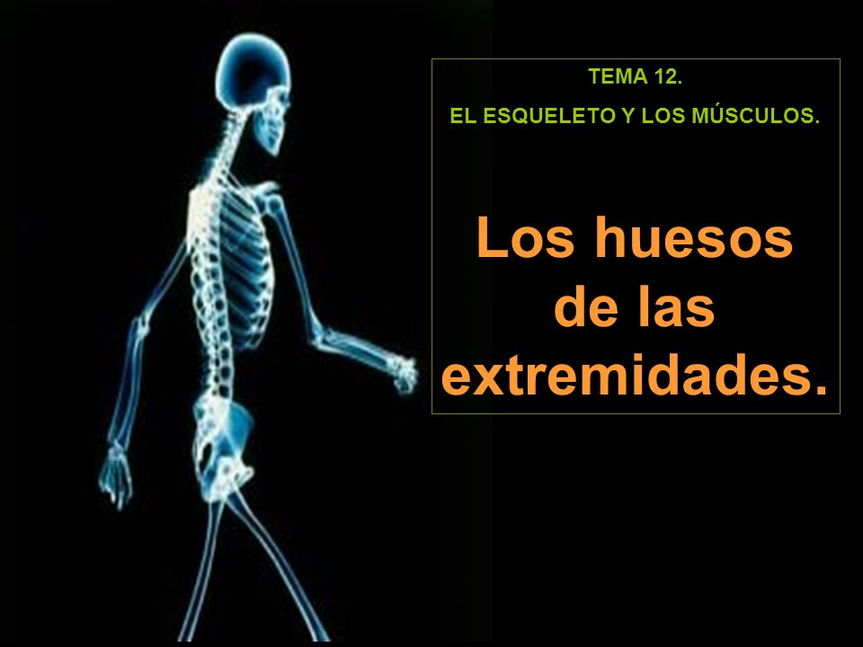 TEMA 12. EL ESQUELETO Y LOS MÚSCULOS. Los huesos de las extremidades.