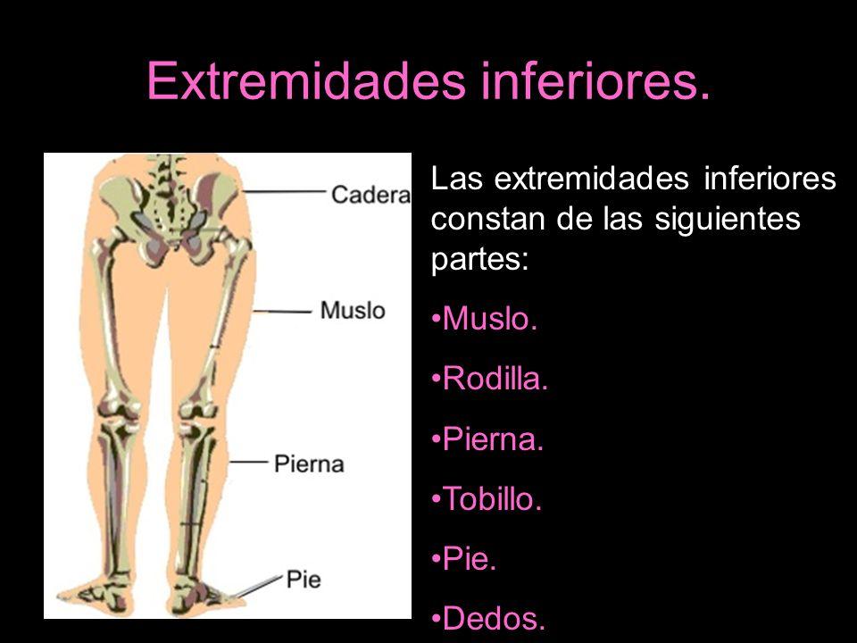 Extremidades inferiores. Las extremidades inferiores constan de las siguientes partes: Muslo. Rodilla. Pierna. Tobillo. Pie. Dedos.