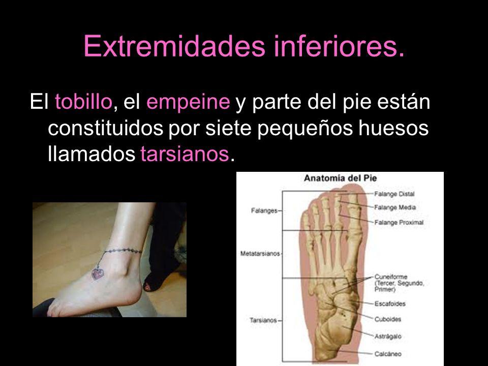 Extremidades inferiores. El tobillo, el empeine y parte del pie están constituidos por siete pequeños huesos llamados tarsianos.