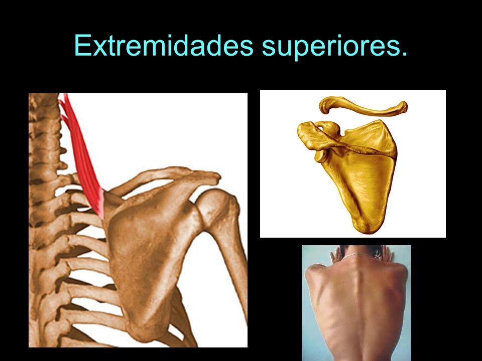 Lesiones de los huesos y articulaciones.Luxaciones.