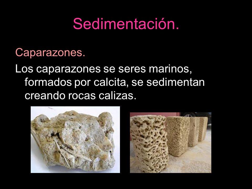 Caparazones. Los caparazones se seres marinos, formados por calcita, se sedimentan creando rocas calizas.