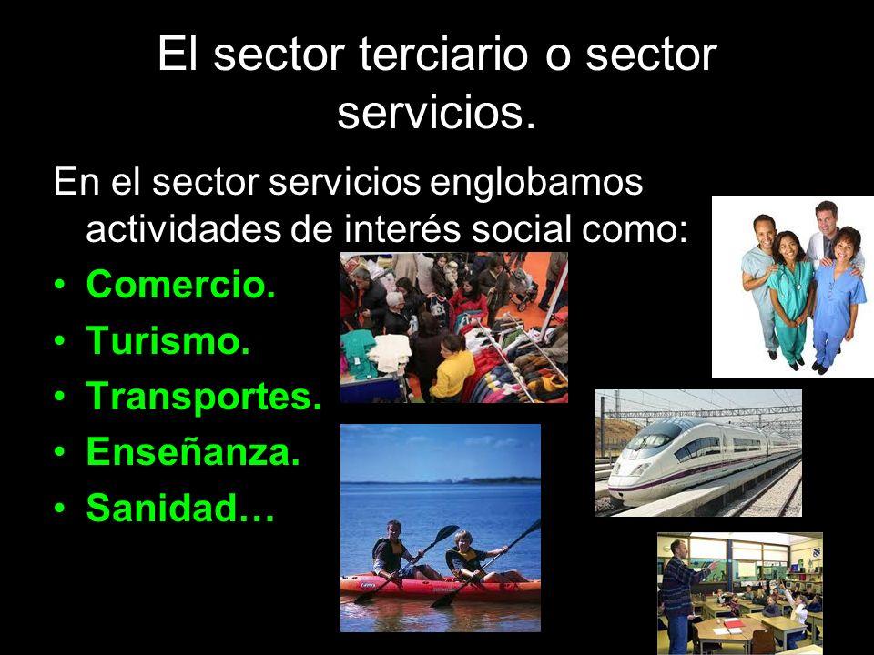 El sector terciario o sector servicios. En el sector servicios englobamos actividades de interés social como: Comercio. Turismo. Transportes. Enseñanz